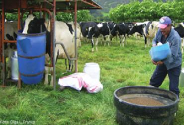 suplementación, preparto, vacas, lactancia, Asojersey, concentrado, ganadero, Producción lechera, enfermedades, mejoramiento genético, Ganadería, ganadería colombia, noticias ganaderas colombia, CONtexto ganadero