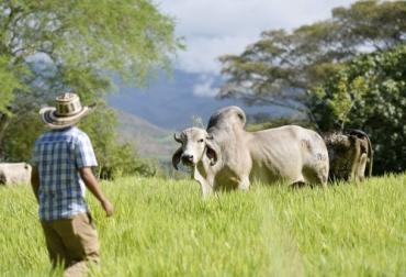 CIAT, forraje, pastoreo, suplementación, eficiencia, productividad, enfermedades, AMBIENTE, banco de germoplasma, accesiones, Agrosavia, productores, Ganadería, ganadería colombia, noticias ganaderas colombia, CONtexto ganadero