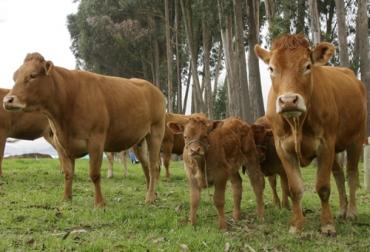 Ciclo de alta fertilidad, ciclo alta fertilidad en vacas, porcentaje de fertilidad en bovinos, que es fertilidad en bovinos, fertilidad del toro, que es la infertilidad en animales, que es esterilidad en animales, reproducción bovina en colombia, factores que afectan la fertilidad en vacas, factores que afectan la fertilidad en vacunos, ganado bovino, ganadería bovina, Ganadería, ganadería colombia, noticias ganaderas, noticias ganaderas colombia, CONtexto ganadero, contextoganadero