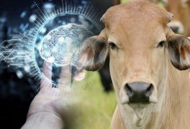 Machine Learning, machine learning ganadería, machine learning ganadería 2020, qué es el machine learning, machine learning en la agroindustria, machine learning para el campo, machine learning agricultura, Agro 4.0, Industria 4.0, industria 4.0 ganadería, industria 4.0 lechería, ganaderos industria, ganaderos industria 4.0, inteligencia artificial en ganadería, avances tecnología ganadería, Ganadería, ganadería colombia, noticias ganaderas, noticias ganaderas colombia, CONtexto ganadero, contextoganadero