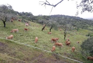 majadeo, Bienestar Animal, Medio Ambiente, pastoreo, vaquero, pastor, Ganadería regenerativa, suplementación, pamcoger, estiércol, fertilizante, suelos, pasturas, manada, bovinos, Ganadería, ganadería colombia, noticias ganaderas colombia, CONtexto ganadero