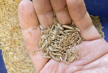 Ganadería, ganadería colombia, noticias ganaderas, noticias ganaderas colombia, CONtexto ganadero, semillas, pasturas, cuidado de las pasturas, rentabilidad de las pasturas, cuidado de las semillas, recomendaciones compra de semillas, recomendaciones cuidados de semillas, almacenamiento de semillas, envio de muestras de semillas