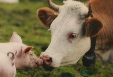 antimicrobianos, resistencia antimicrobiana, FAO, superbacterias, ganadería, ganadería Colombia, noticias ganaderas, noticias ganaderas Colombia, CONtexto ganadero