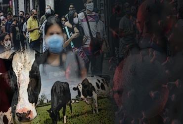 pandemia, ganadería, ganadería avanzar, colombia, contexto ganadero