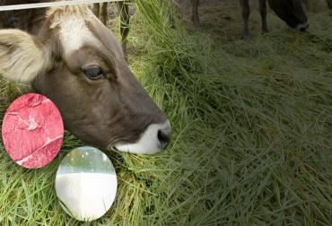 Carne leche fitonutrientes, carne leche pasto fitonutrientes, animales alimentados con pasto fitonutrientes, animales alimentados con pasto salud humana, Carne pasto 2021, carne de vaca alimentada con pasto, mercado de la carne alimentada con pasto, carne pasto mundo, consumo de carne de vaca, beef 2021, estudio sobre carne de vaca alimentada con pasto, ganaderos, ganaderos colombia, ganado, bovinos, ganado bovino, Ganadería, ganadería colombia, noticias ganaderas, noticias ganaderas colombia, CONtexto
