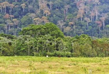Ganadería, ganadería colombia, noticias ganaderas, noticias ganaderas colombia, CONtexto ganadero, ganadería colombiana sostenible, Ganadería Sostenible, especies nativas, árboles nativos, árboles nativos en colombia, Proyecto Ganadería Colombiana Sostenible