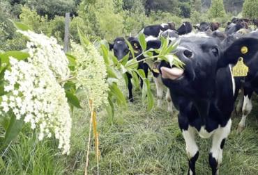 Ganadería, ganadería colombia, noticias ganaderas, noticias ganaderas colombia, CONtexto ganadero, Ganadería Sostenible, sostenibilidad, manejo sostenible, sostenibilidad ambiental, manejo sostenible ganadería, precio de carne, carne sostenible, precio de leche, leche sostenible