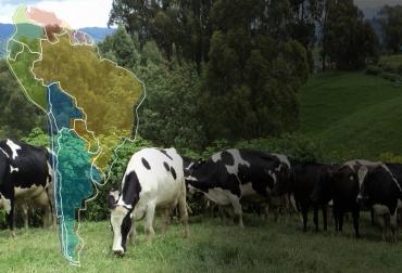 ganadería, ganadería colombia, noticias ganaderas, noticias ganaderas colombia, contexto ganadero, carne, carne sostenible, carne a pasto, carne sostenible en suramérica, producción de carne sostenible, trazabilidad carne, carne premium, carne a pasto, producción de carne a pasto,