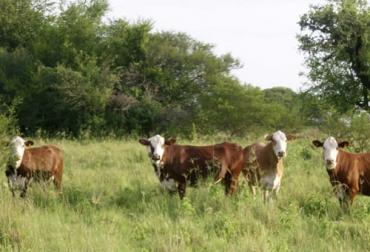 Ganadería, ganadería colombia, noticias ganaderas, noticias ganaderas colombia, CONtexto ganadero, hipocalcemia, hipomagnesemia, enfermedades metabólicas, sistema productivo, sanidad animal, Genética, nutrición, Genética bovina, nutrición bovina, sistema digestivo bovino, sistema nervioso bovino, sistema mamario bovino. Sistema locomotor bovino, sistema reproductivo bovino