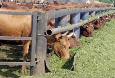 Preacondicionamiento, preacondicionamiento vacas, preacondicionamiento vacas Colombia, Investigación transporte ganado, investigación transporte vacas, transporte vacas, Bienestar Animal, transporte animal, transporte bovino, costos preacondicionamiento, costos preacondicionamiento vacas, ganaderos, ganaderos colombia, ganado, vacas, vacas Colombia, bovinos, Ganadería, ganadería colombia, noticias ganaderas, noticias ganaderas colombia, CONtexto ganadero, contextoganadero