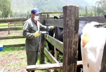 Ganadería, ganadería colombia, noticias ganaderas, noticias ganaderas colombia, CONtexto ganadero, Ciclo de Vacunación, Ciclo de Vacunación contra aftosa, reacción alérgica vacuna contra aftosa, Vecol, vecol colombia