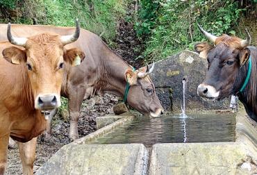 Abrevaderos para ganado