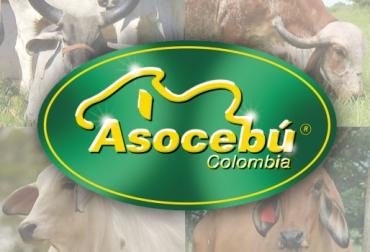 Asamblea Asocebú