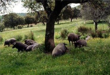 Gestión de residuos orgánicos del cerdo