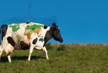 Día mundial de la leche