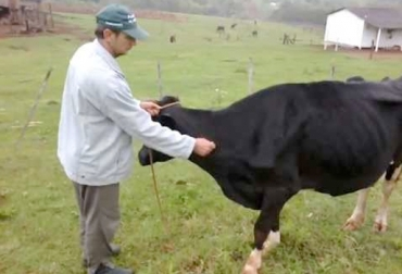 Deshidratación en bovinos