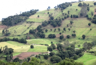 Cultivo agroforestal, Solapa 4 - Finagro