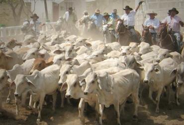 ganadería Colombia
