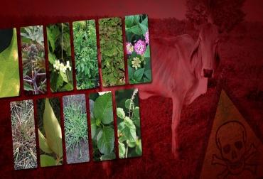 Plantas tóxicas para ganado