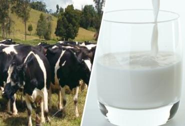 Producen leche con alto contenido de omega-3