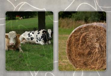alimento para ganado bovino