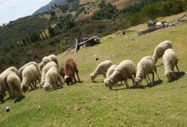 Dieta sostenible en ovinos