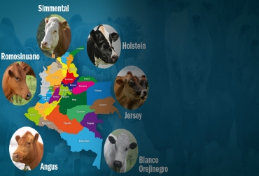 razas bovinas más eficientes para cruce