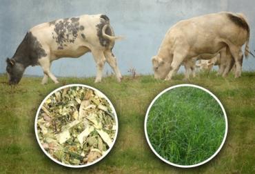 Ensilaje para ganaderos