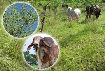 ganadería doble propósito
