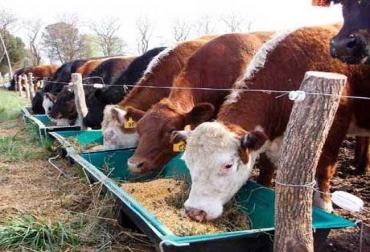 Más de 20.000 ganaderos serán beneficiados con esta campaña. Foto: Archivo.