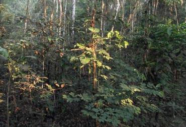 Tasa de deforestación Colombia