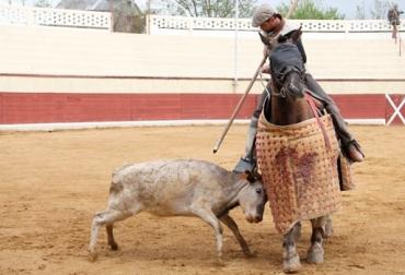 La tienta en la ganadería de toros de lidia
