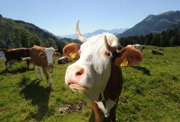 emisiones metano ganadería