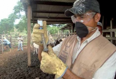 fiebre aftosa en Colombia, Venezuela, Perú,