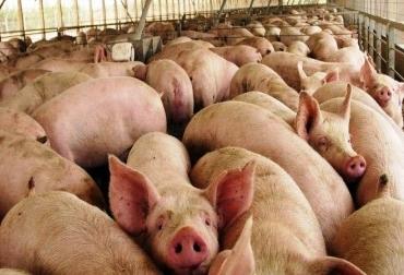 Carne de cerdo de probeta