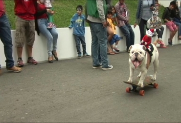 perro skater perú