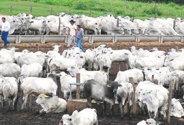 exportaciones de ganado en pie