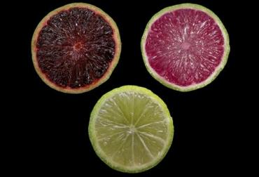 limones transgénicos, limones genéticamente modificados