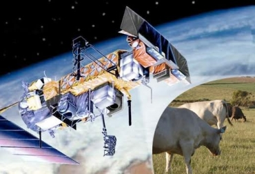 Satélites para vigilar vacas