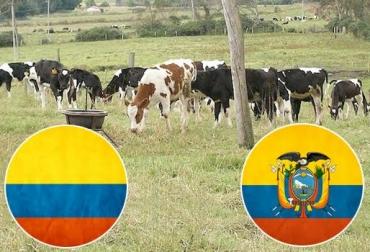 ganadería colomboecuatoriana