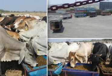 exportaciones ganado en pie Colombia