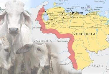 aftosa venezuela, aftosa venezuela noticias, aftosa venezuela cifras, aftosa venezuela fedegán, lafaurie aftosa venezuela, contexto ganadero