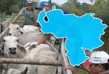 aftosa, Fiebre aftosa, aftosa colombia, fiebre aftosa en Venezuela, fiebre aftosa en Colombia, Fedenaga, carlos oduardo albornoz, ganadería internacional, ganadería colombia, CONtexto ganadero