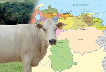 OIE, OIE Venezuela, fiebre aftosa, fiebre aftosa venezuela, certificación fiebre aftosa venezuela, sanidad animal, paises libre de fiebre aftosa, ganadería venezuela, ganadería colombia, noticias ganaderas colombia, contexto ganadero, fedenaga