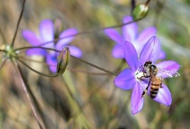 Abejas, pesticidas nefastos, Los pesticidas nefastos para abejas están presentes en 75% de la miel del mundo, CONtexto ganadero, ganadería Colombia, Noticias ganaderas Colombia