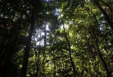 deforestación hace que los trópicos emitan más CO2 que el que absorben, CONtexto ganadero, ganadería Colombia, Noticias ganaderas Colombia