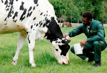 Bienestar Animal, criar animales, producir carne, carnetec, CONtexto ganadero, ganadería colombia, noticias ganaderas colombia