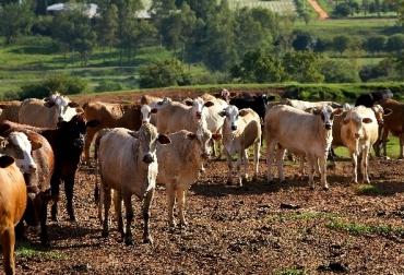 Paraguay, paraguay exportaciones de carne, paraguay protecta exportar a Estados Unidos y Hong Kong carne, CONtexto ganadero, ganadería Colombia, Noticias ganaderas Colombia