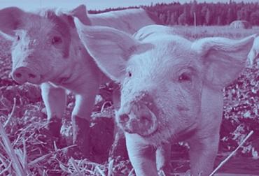 Bienestar Animal, Business Benchmark on Farm Animal Welfare, bienestar animal en el mundo, cuidado de los animales, protección de los animales, restaurantes, restaurantes bienestar animal, supermercados bienestar animal, ganadería, ganadería internacional, noticias ganaderas, noticias ganaderas colombia, contexto ganadero