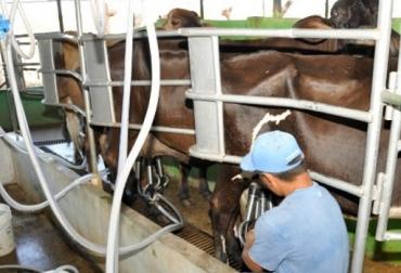Panama, leche, productores de leche dejarán de vender 3 millones de dólares, Estrella Azul, Estrella Azul dejará de comprar el 15% de la producción de leche, CONtexto ganadero, ganadería Colombia, Noticias ganaderas Colombia